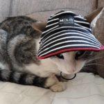 MORNARSKI kačket