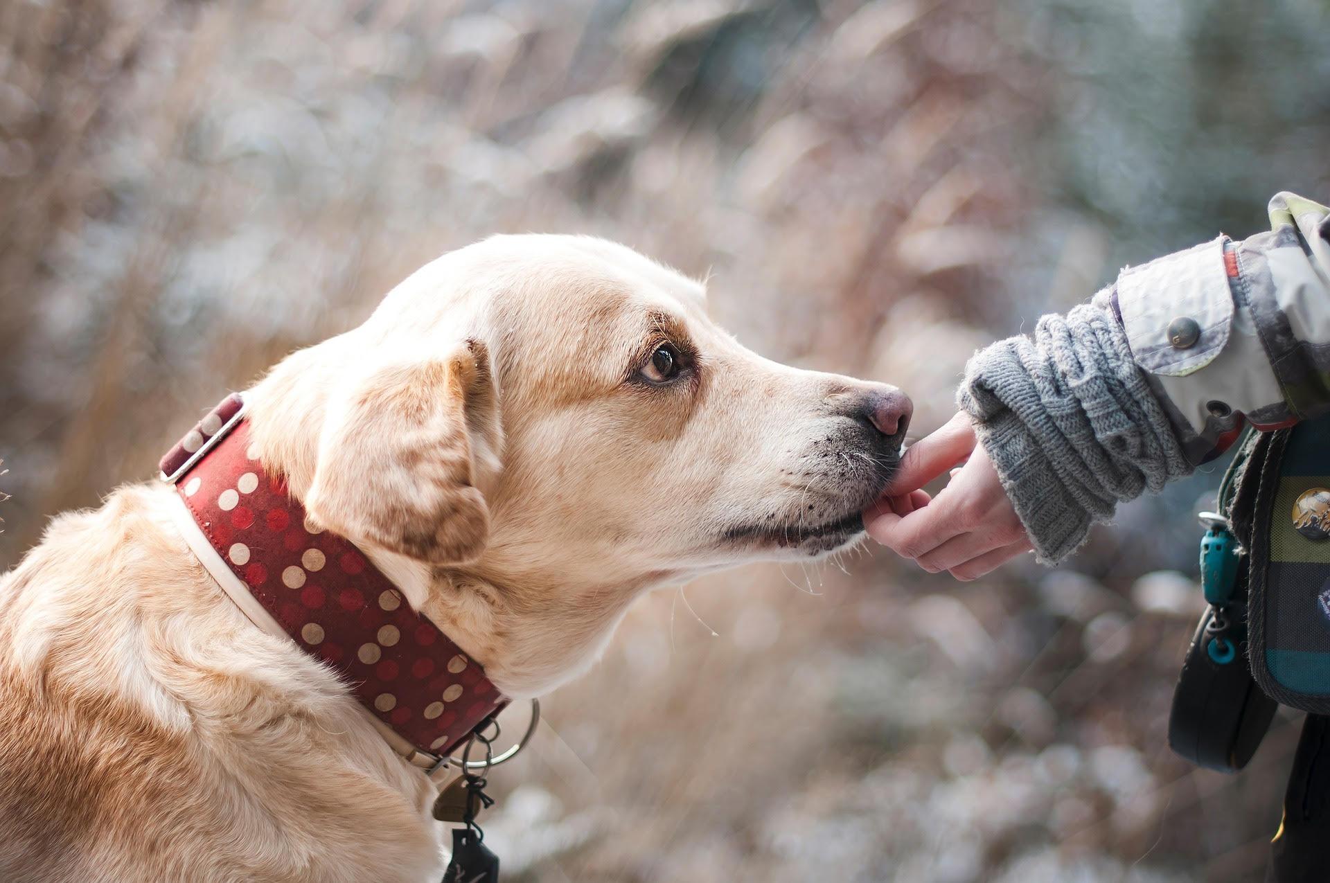 10 stvari koje psi obožavaju