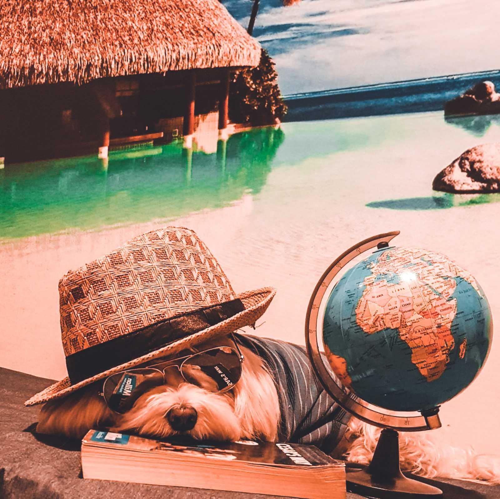 Putovanje – sa ili bez psa?
