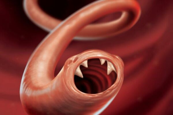 hookworm art2